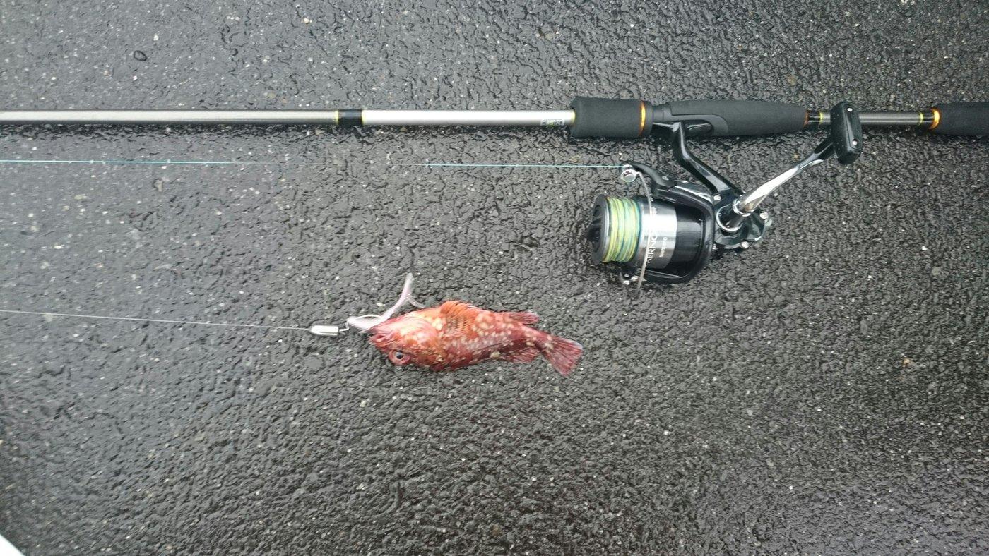 たかひさんの投稿画像,写っている魚はアカカサゴ