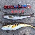 佐藤翔琉さんの北海道余市郡での釣果写真