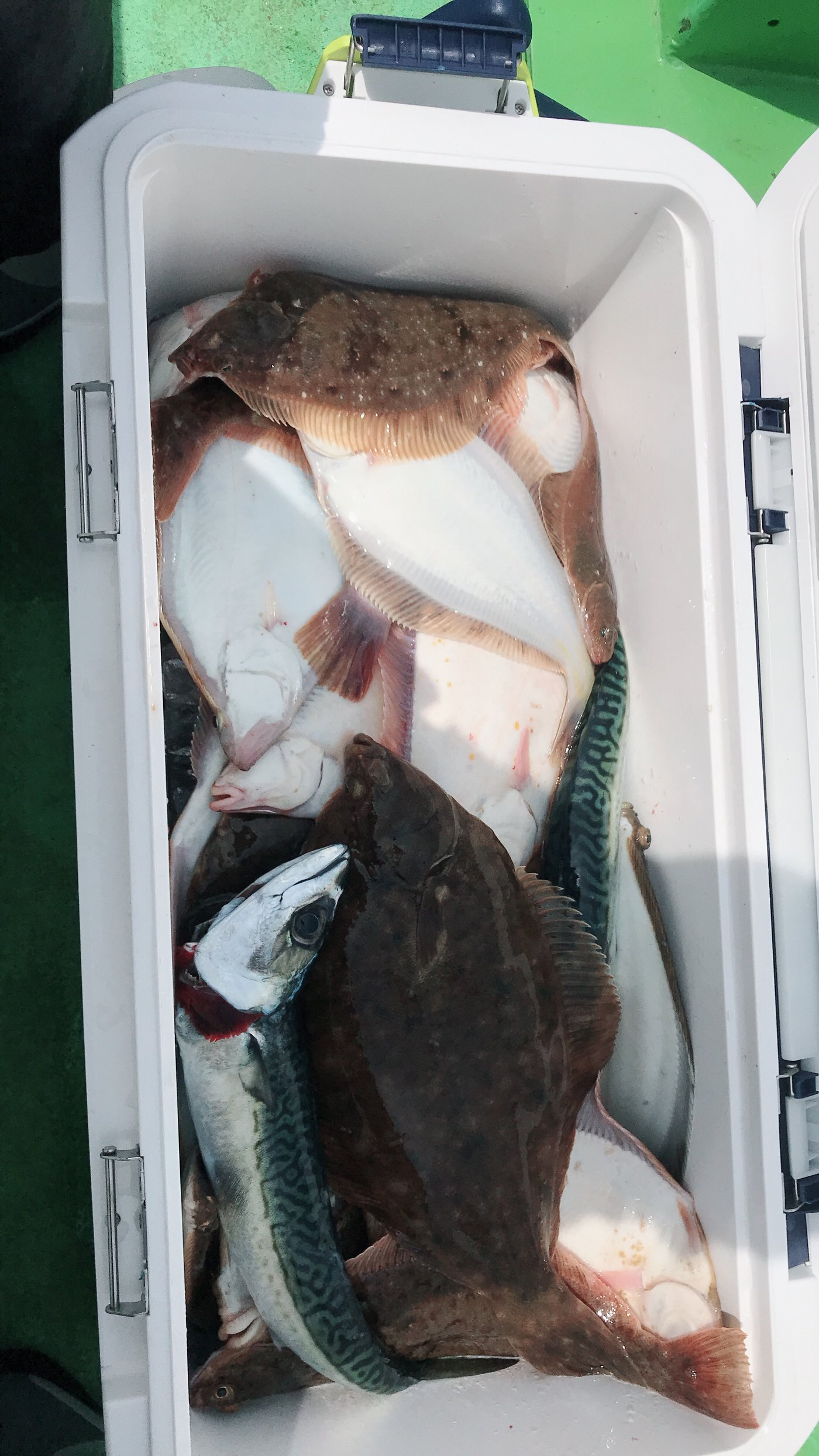 吉田のユージさんの投稿画像,写っている魚はカレイ