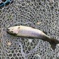 いーさんの茨城県石岡市での釣果写真