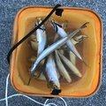りょーうたさんの山口県周南市での釣果写真
