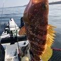 KFSさんの熊本県天草郡での釣果写真