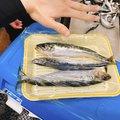 そらじろうさんの石川県珠洲市での釣果写真