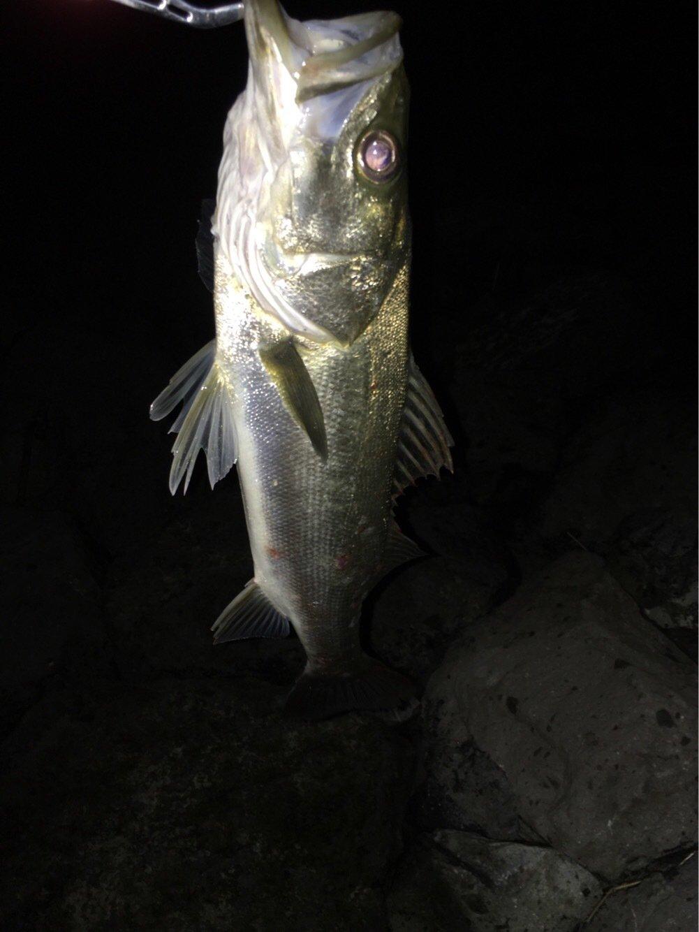 亀さんの投稿画像,写っている魚はスズキ