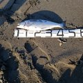 はしえばぁーばぁさんの北海道苫小牧市での釣果写真