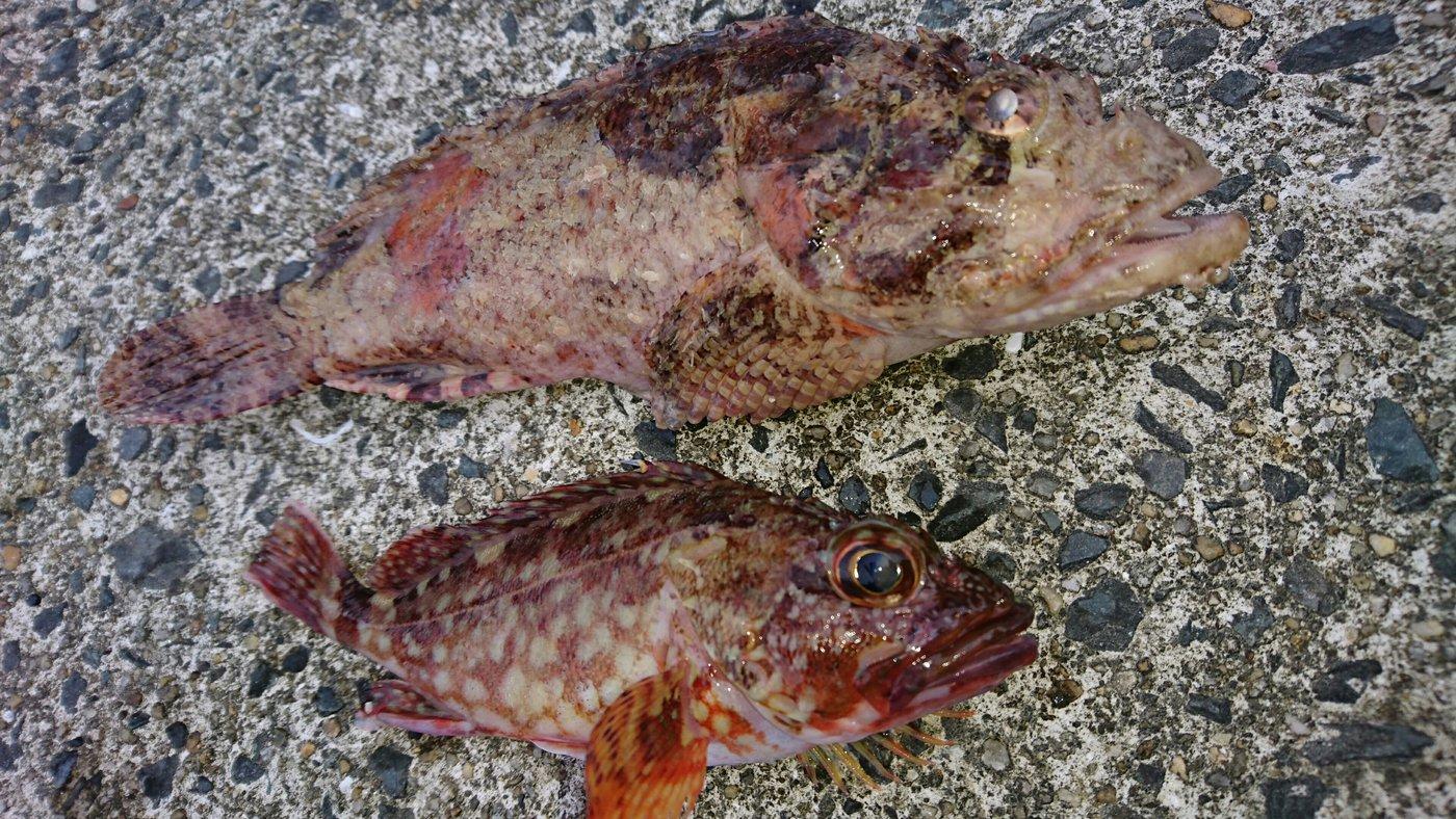 そると小僧さんの投稿画像,写っている魚はオニオコゼ