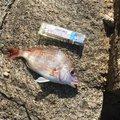 えびちゃん❗️さんの岡山県備前市での釣果写真