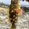 ノイトラさんの鹿児島県熊毛郡での釣果写真