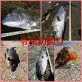 tkさんの長崎県佐世保市での釣果写真