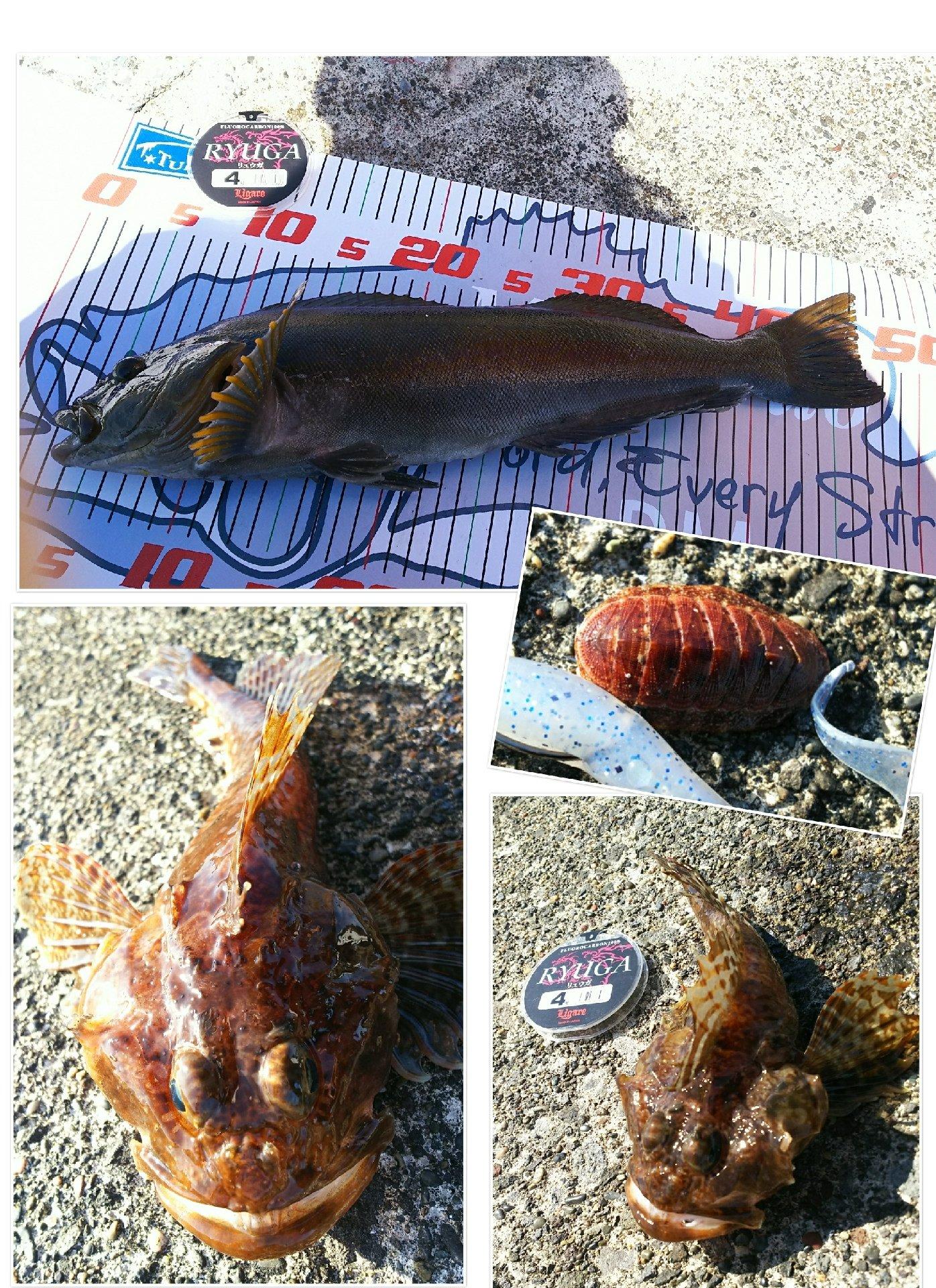 かなぼうさんの投稿画像,写っている魚はカジカ,アイナメ