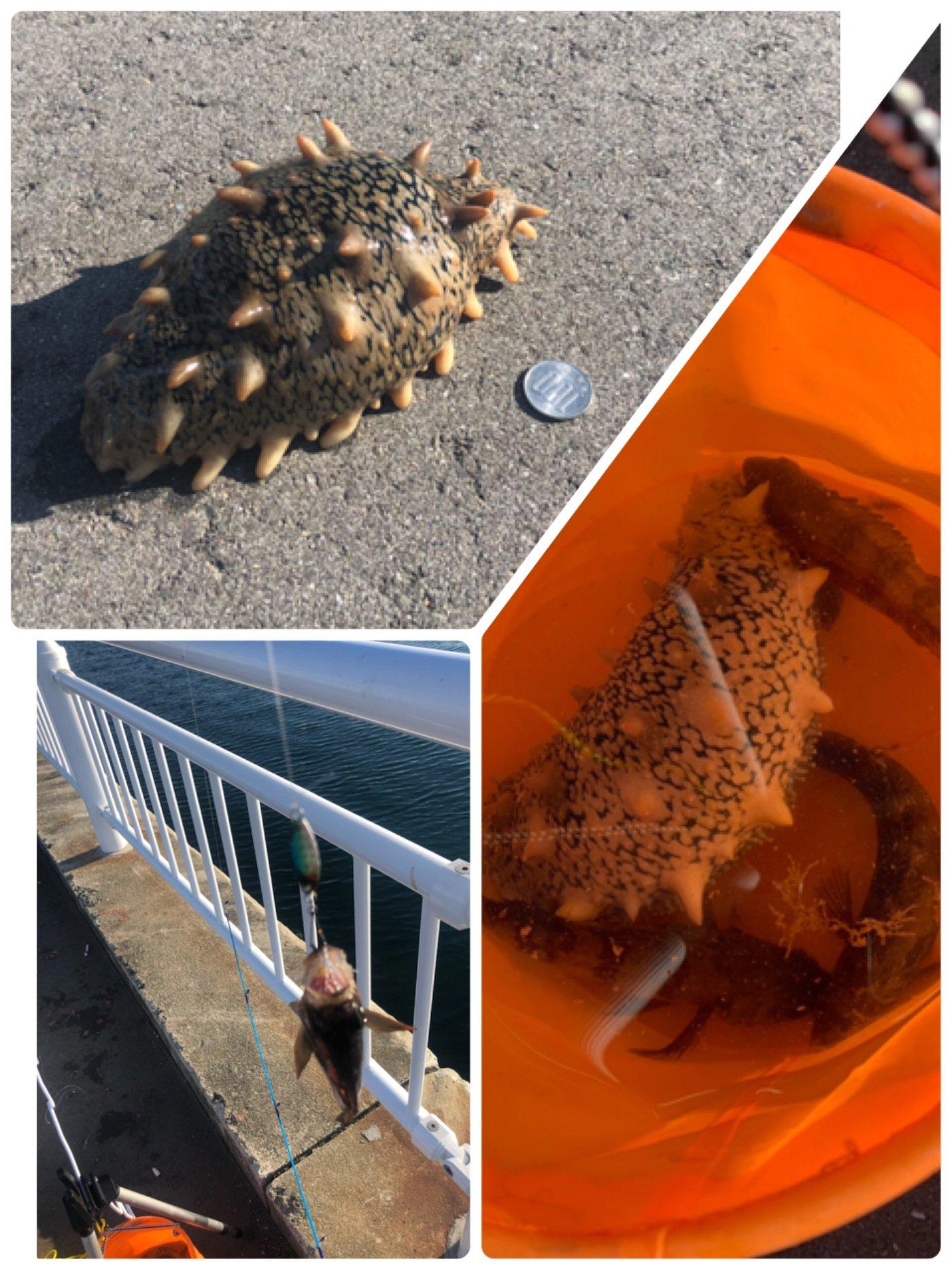 サイトーさんの投稿画像,写っている魚はメバル,アイナメ,カレイ