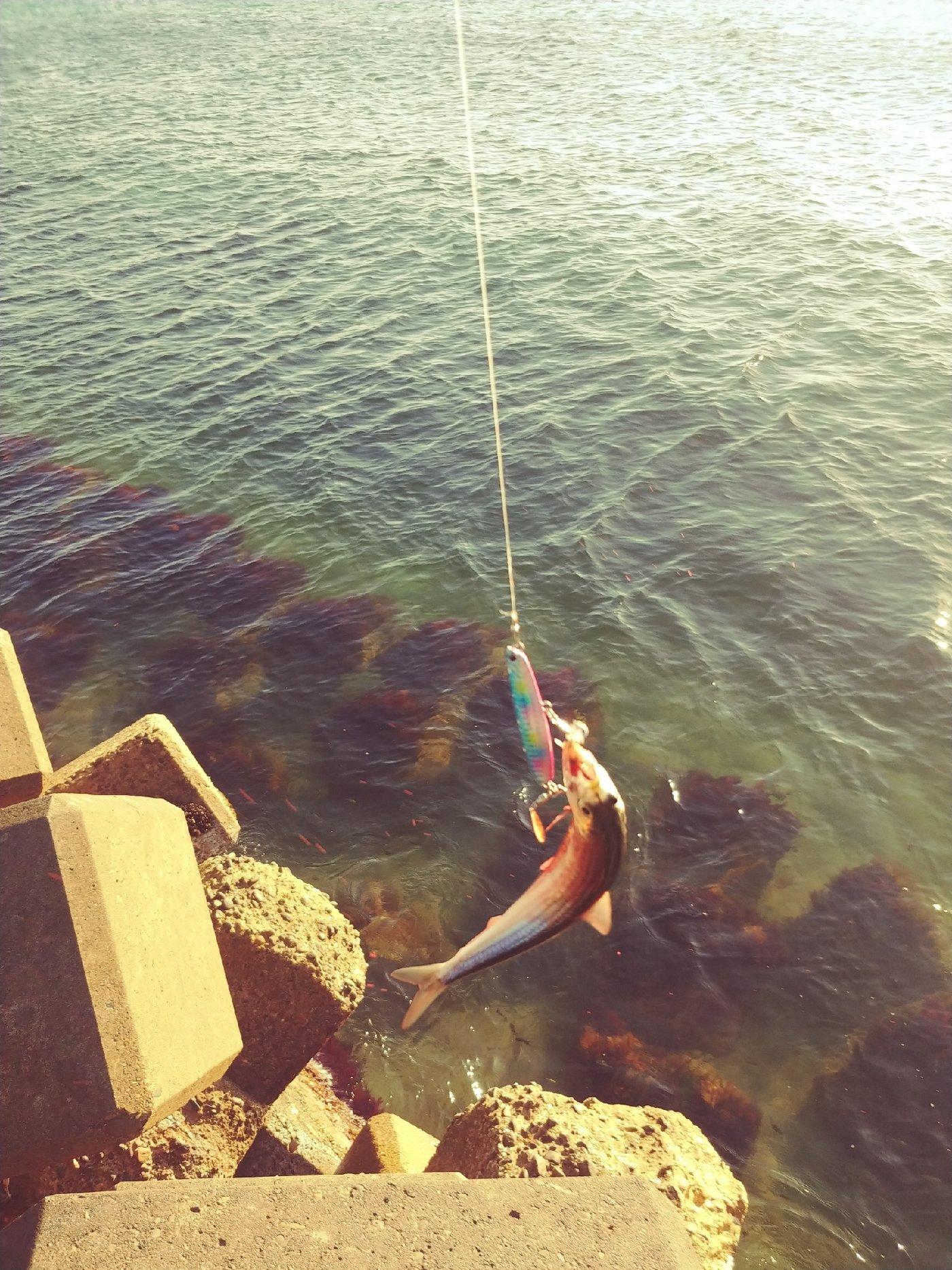 cool-0314さんの投稿画像,写っている魚は