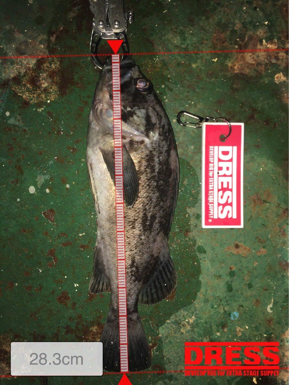 拓也さんの投稿画像,写っている魚はソイ