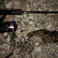 takiさんの静岡県湖西市でのカサゴの釣果写真