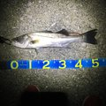 こーたろーさんの宮崎県串間市での釣果写真