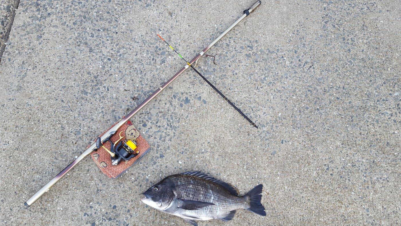釣りキチみずき🐳🐠🐡🐙🐟🐬さんの投稿画像,写っている魚はクロダイ