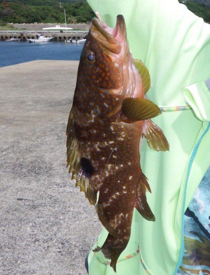 たくさんの投稿画像,写っている魚はキジハタ