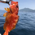 さとしさんの鹿児島県枕崎市での釣果写真