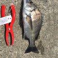 釣り吉さんの山口県防府市での釣果写真