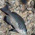 sugaarさんの千葉県鴨川市での釣果写真