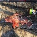 TDMAさんの宮崎県日向市での釣果写真
