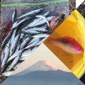 金(きん)さんの静岡県沼津市でのマサバの釣果写真