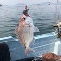 まつのさんの広島県豊田郡での釣果写真