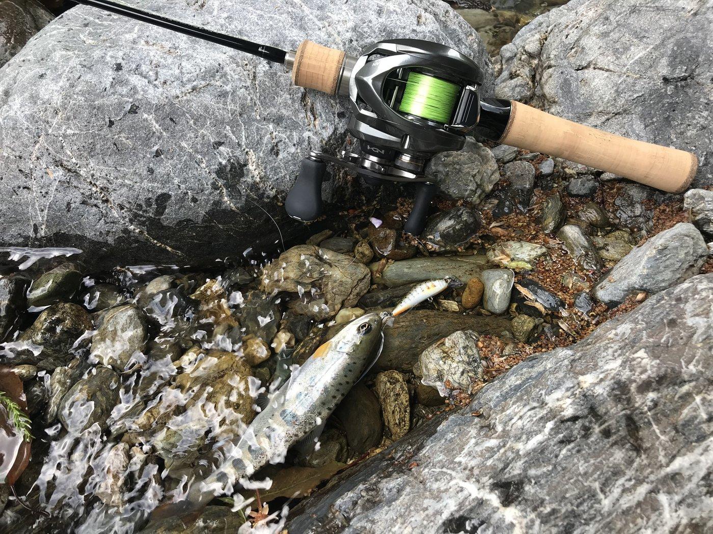 ヒロさんの投稿画像,写っている魚はヤマメ