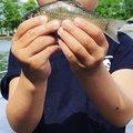 釣りキチ中学生さんのヘラブナの釣果写真