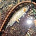 kappatoshiさんの奈良県吉野郡でのヤマメの釣果写真
