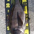 琵琶湖ツナモデルさんの山口県周南市での釣果写真