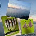 sy_unさんの新潟県西蒲原郡での釣果写真