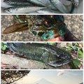 SOL Pianomaniaさんの静岡県牧之原市での釣果写真