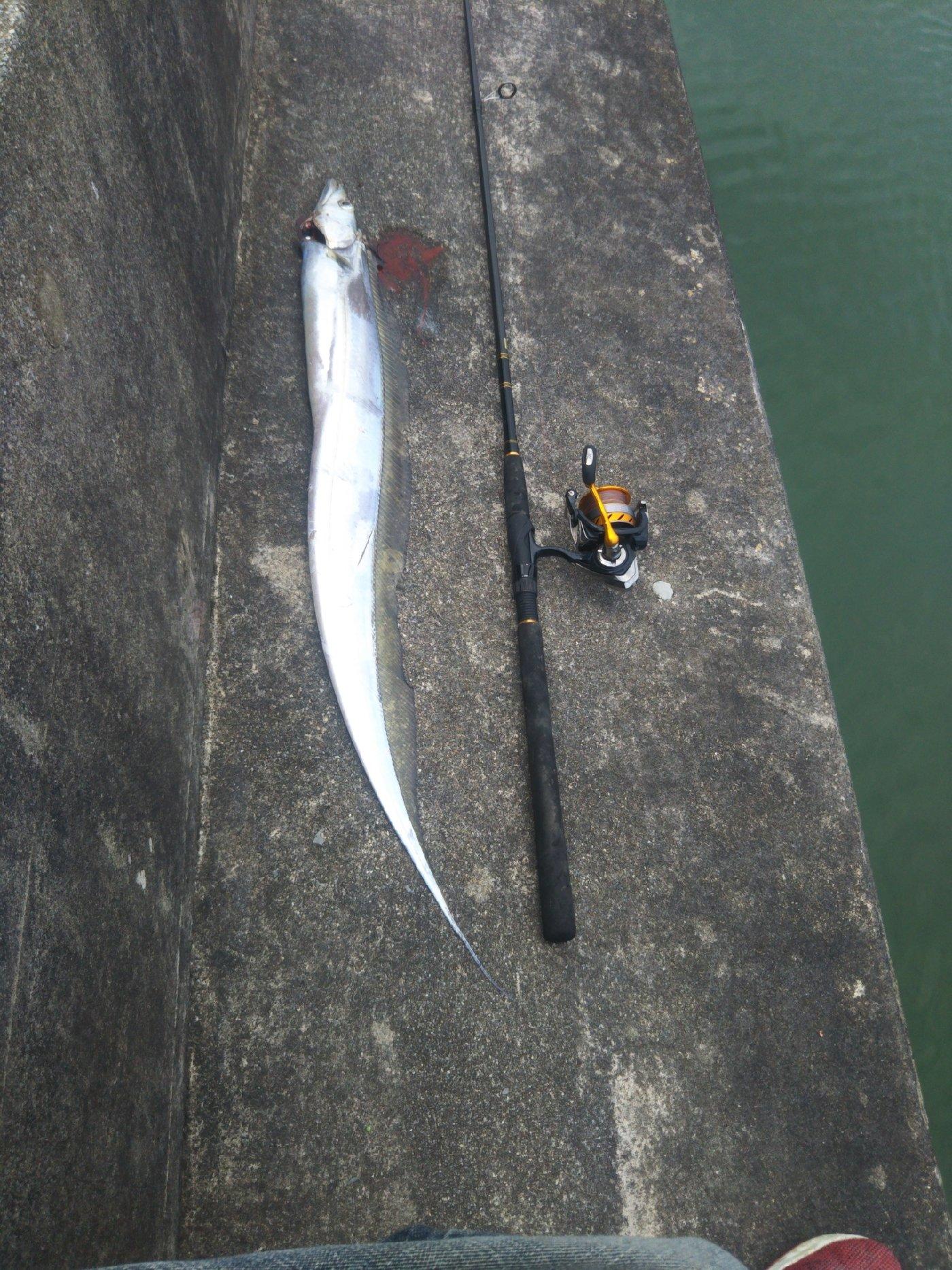 オカナオさんの投稿画像,写っている魚は