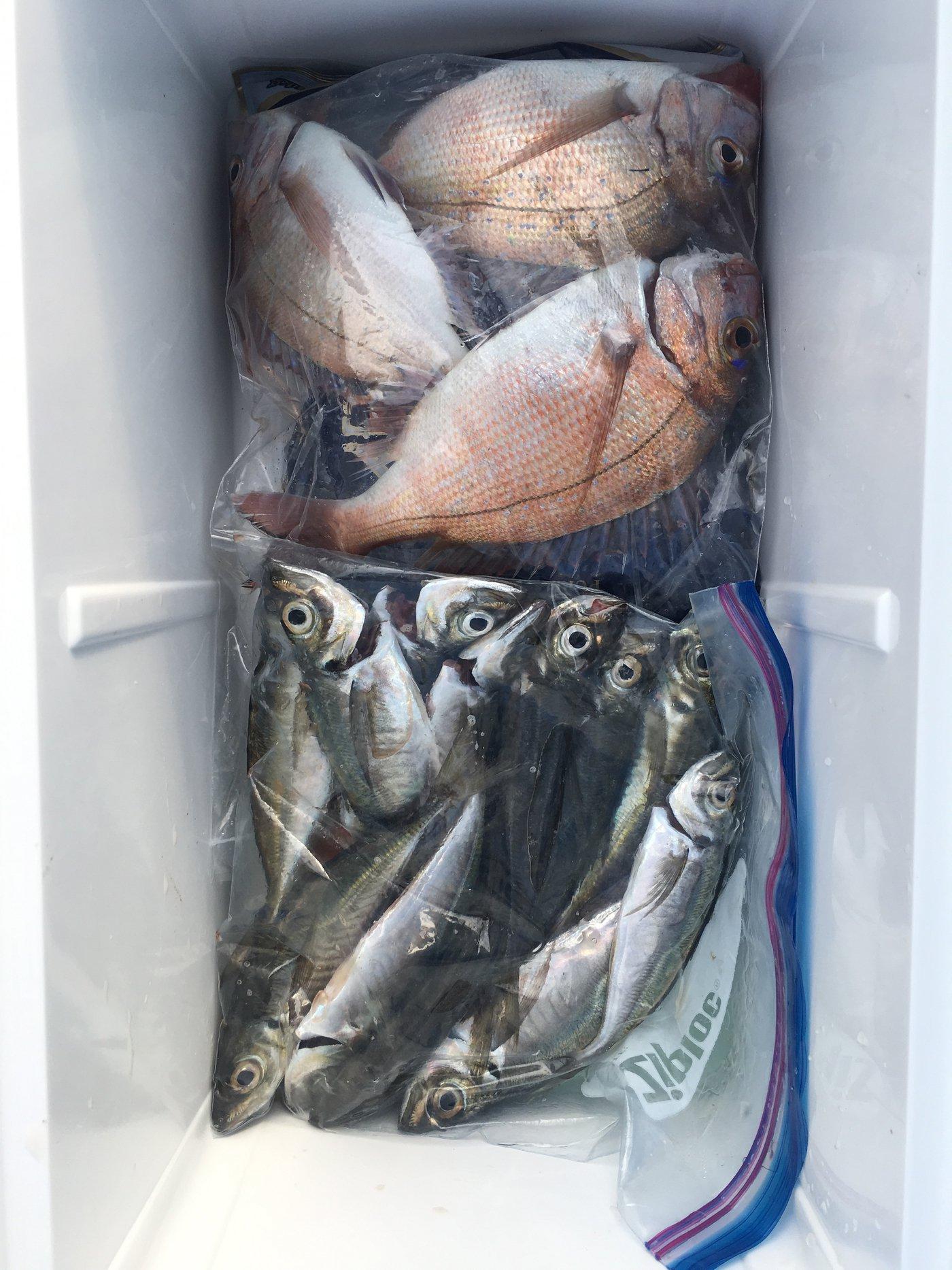RioReoさんの投稿画像,写っている魚はマダイ,アジ