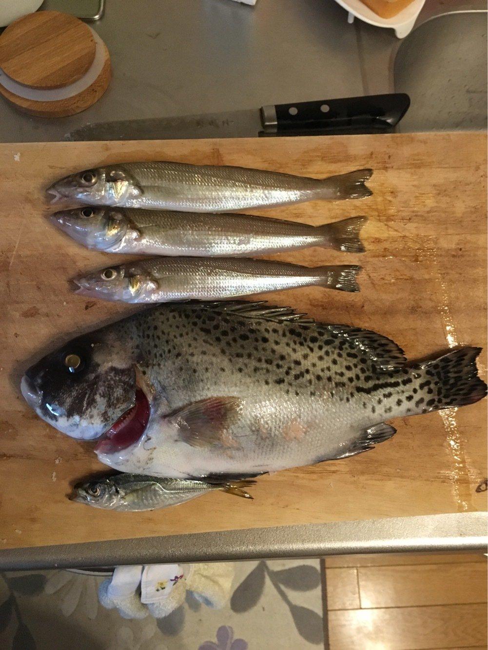 ゆうとさんの投稿画像,写っている魚はシロギス