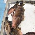 まつのさんの広島県竹原市での釣果写真