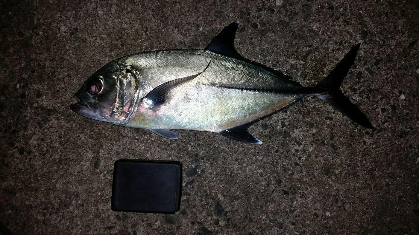 はるさんの投稿画像,写っている魚はギンガメアジ