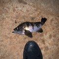 トーマスさんの茨城県高萩市での釣果写真