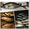 T.Genkiさんの大分県津久見市での釣果写真