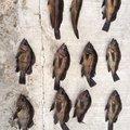 トーマスさんの茨城県那珂郡での釣果写真
