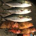 イワタカさんの長崎県北松浦郡での釣果写真