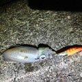 朋希さんの徳島県勝浦郡での釣果写真