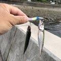 かつさんの鹿児島県垂水市での釣果写真