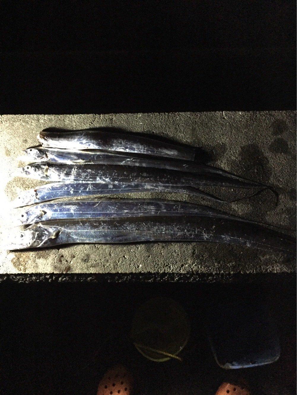 JUN715さんの投稿画像,写っている魚はタチウオ