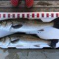イーグルさんの石川県鳳珠郡での釣果写真