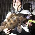 わっさんさんの神奈川県横浜市でのメバルの釣果写真