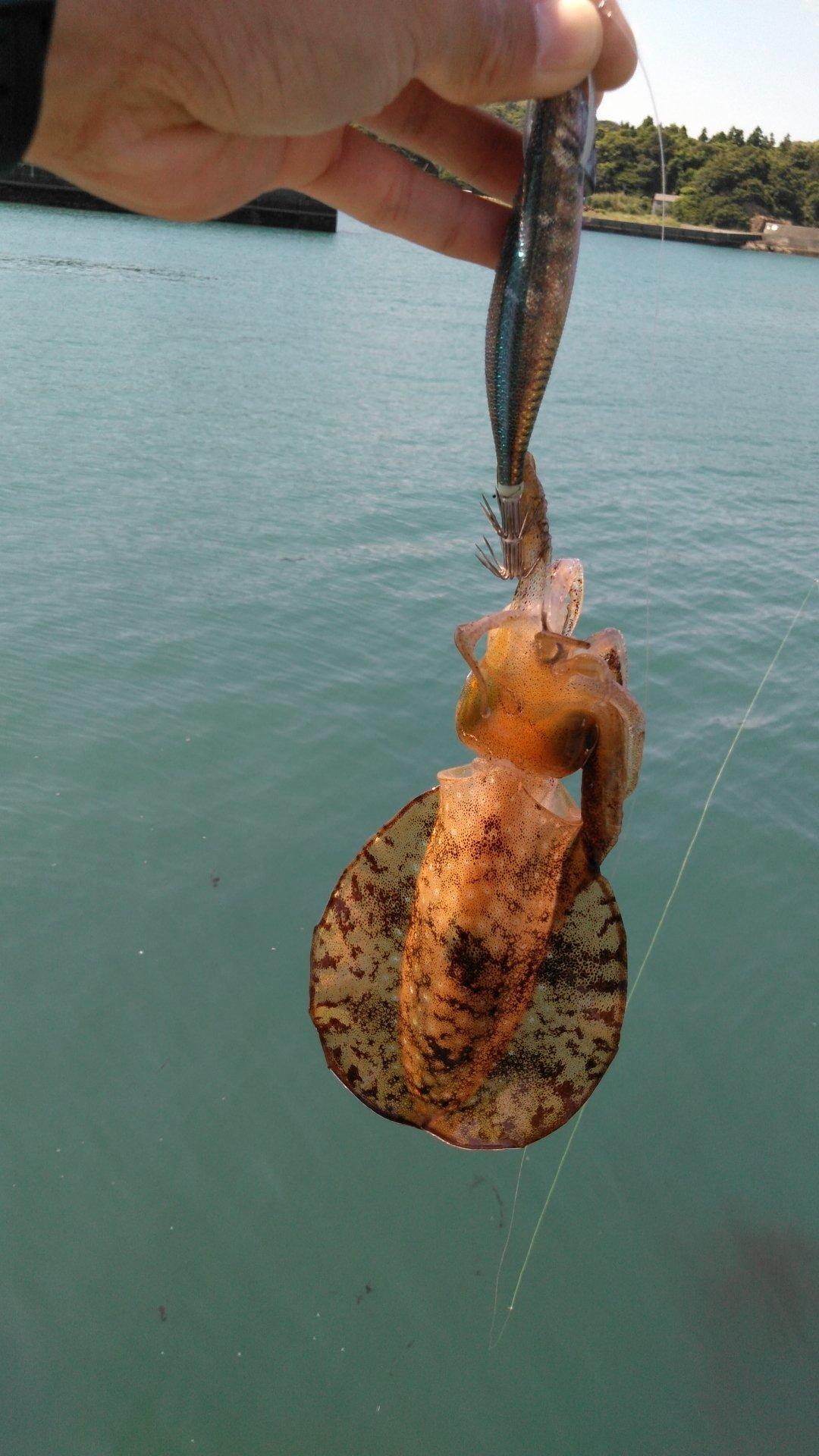 たーまさんの投稿画像,写っている魚は