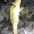 jcさんの山口県下松市での釣果写真