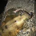 レオさんの三重県志摩市での釣果写真